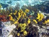 <b>Coral of New Guinea Reef</b>   (Jul 16, 2004, 03:00pm)