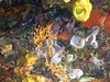<b>Mix of coral in New Guinea Reef</b>   (Jul 16, 2004, 02:57pm)