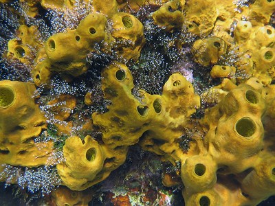 Yellow tube sponge with christmas tree hydroid   (Jul 16, 2004, 02:44pm)