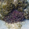 <b>Giant Anemone</b>   (Jul 21, 2004, 03:37pm)