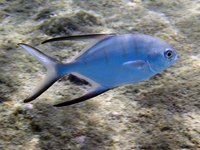 Palometa   (Jul 16, 2004, 10:22am)