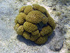<b>White encrusting zoanthid</b>   (Jul 26, 2004, 09:59am)