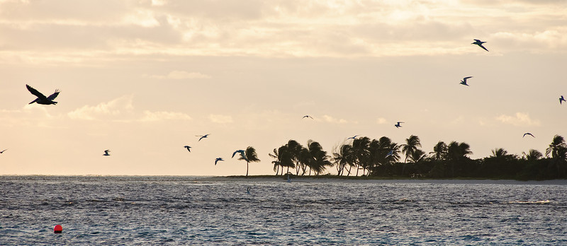 Early Morning Birds (Dec 10, 2008, 06:57am)<br /> <br /> A flock of birds seen over the reefs of the Tobago Cays.  Petit Tobac is in the background.