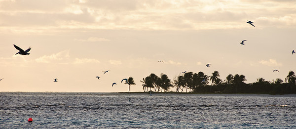 Early Morning Birds (Dec 10, 2008, 06:57am)  A flock of birds seen over the reefs of the Tobago Cays.  Petit Tobac is in the background.