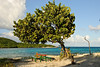 Tree and Table (Dec 10, 2008, 04:42pm)<br /> <br /> This solitary tree is on the beach on the north side of Petit Bateau (in the Tobago Cays).  This small bit of shade seems to have attracted a picnic table, trying to escape from the sun.  The island of Petit Rameau is in the background.