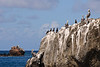 Pelican Perch (Dec 12, 2008, 02:14pm)<br /> <br /> At the west end of Union Island, just past Chatham Bay, the Pelicans perch on any and all available surfaces.  If you look closely, you can see that the pelicans are not alone on this rock, but based on the white streaks, they have been there for a while.