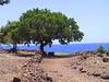 <b>Tree at Lapakahi State Historical Park</b>   (Jul 15, 2001, 12:43pm)