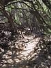 <b>Through the woods on the Malama Petroglyph Trail</b>   (Jul 15, 2001, 02:04pm)