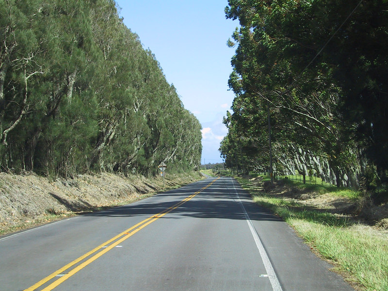 <b>Trees along Kohala Mountain Road</b>   (Jul 15, 2001, 10:17am)