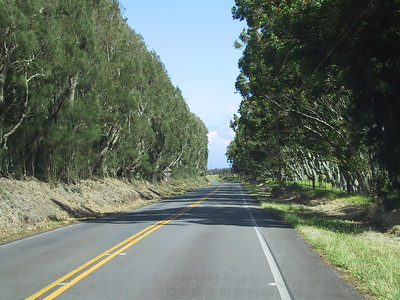 Trees along Kohala Mountain Road   (Jul 15, 2001, 10:17am)