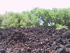 <b>Lava field at start of Malama Petroglyph Trail</b>   (Jul 15, 2001, 02:34pm)
