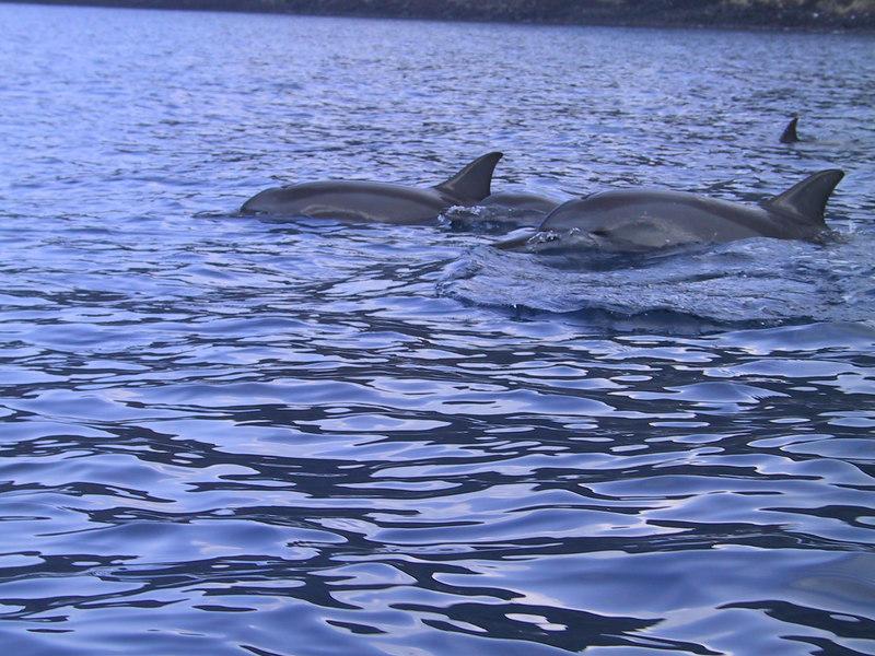 <b>Wild dolphins in Kealakekua Bay</b>   (Jul 16, 2001, 08:53am)