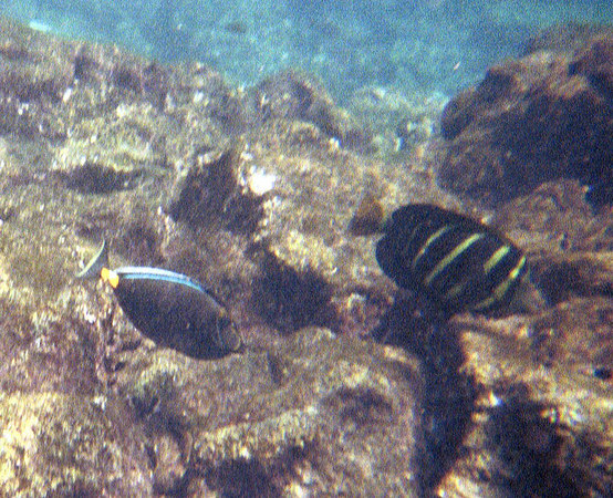 <b>Two fish swimming over the coral</b>   (Jul 16, 2001, 10:00am)