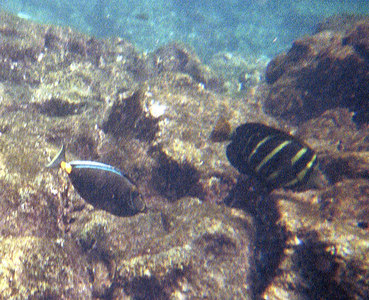 Two fish swimming over the coral   (Jul 16, 2001, 10:00am)