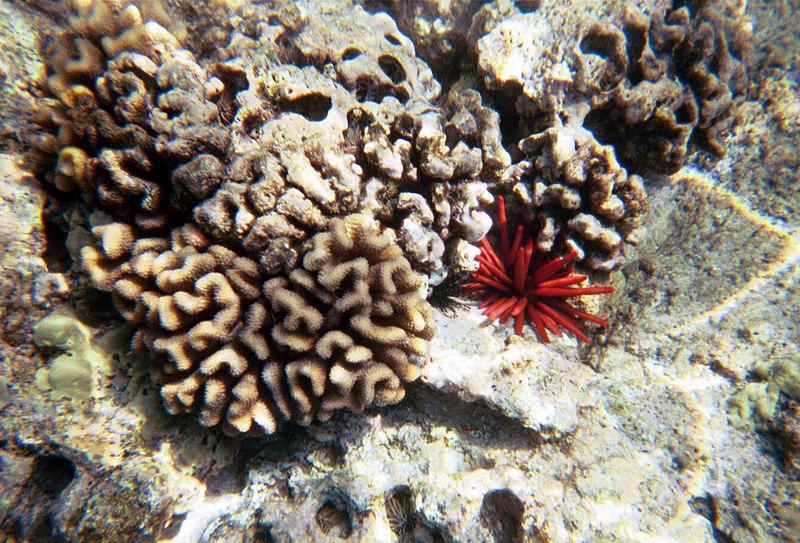 <b>Sea anome and coral</b>   (Jul 16, 2001, 10:00am)