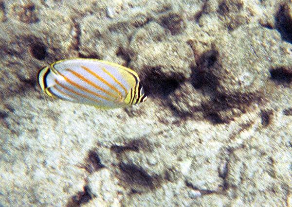 <b>Ornate butterfly</b>   (Jul 16, 2001, 10:00am)
