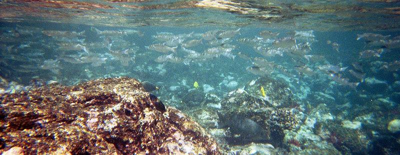<b>Large school of fish</b>   (Jul 16, 2001, 10:00am)