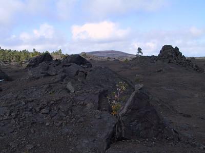 Mauna Ulu seen from 1969 laval flow   (Jul 17, 2001, 03:57pm)