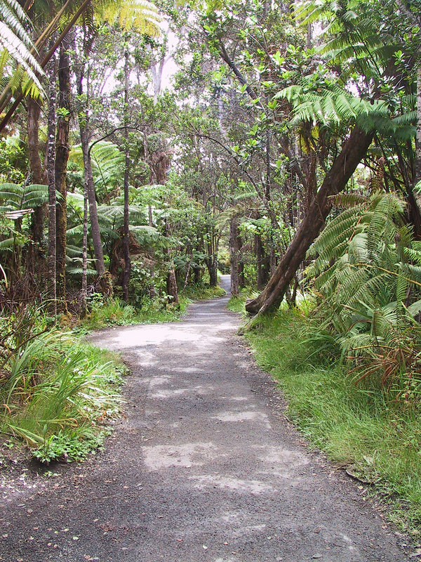 <b>Walk through rain forest outside Thurston Lava Tube</b>   (Jul 17, 2001, 02:53pm)