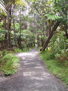 Walk through rain forest outside Thurston Lava Tube   (Jul 17, 2001, 02:53pm)