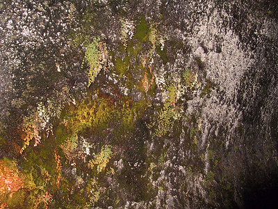 Moss on wall outside Thurston Lava Tube   (Jul 17, 2001, 02:24pm)