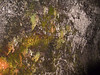 <b>Moss on wall outside Thurston Lava Tube</b>   (Jul 17, 2001, 02:24pm)