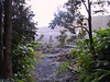 <b>Entering Kilauea Iki from rain forest</b>   (Jul 18, 2001, 06:39am)