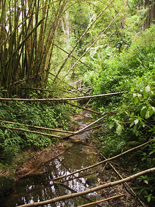 Stream and rain forest near Akaka Falls   (Jul 18, 2001, 02:00pm)