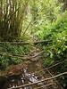 <b>Stream and rain forest near Akaka Falls</b>   (Jul 18, 2001, 02:00pm)