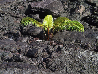 More life returing to Kilauea Iki   (Jul 18, 2001, 07:23am)