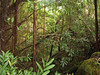 <b>Rain forest neat Akaka Falls</b>   (Jul 18, 2001, 02:04pm)