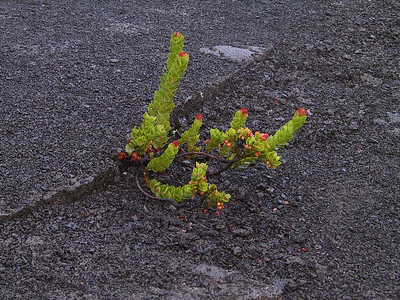 Life begins to return to Kilauea Iki crater   (Jul 18, 2001, 06:48am)
