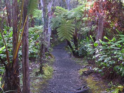 Kilauea Iki rim trail   (Jul 18, 2001, 07:42am)