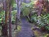 <b>Kilauea Iki rim trail</b>   (Jul 18, 2001, 07:42am)
