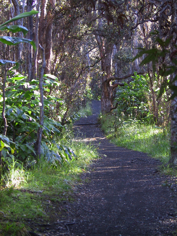 <b>Kilauea Iki rim trail through rain forest</b>   (Jul 18, 2001, 07:38am)