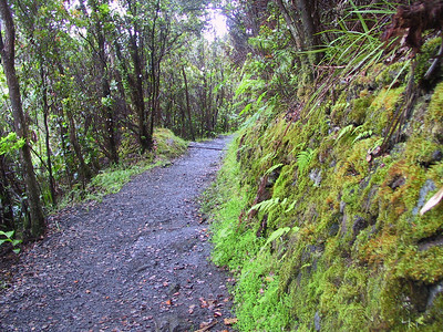 Moss on side of path heading into Kilauea Iki   (Jul 18, 2001, 06:26am)