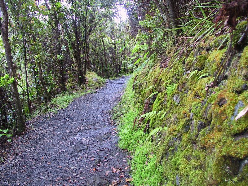 <b>Moss on side of path heading into Kilauea Iki</b>   (Jul 18, 2001, 06:26am)
