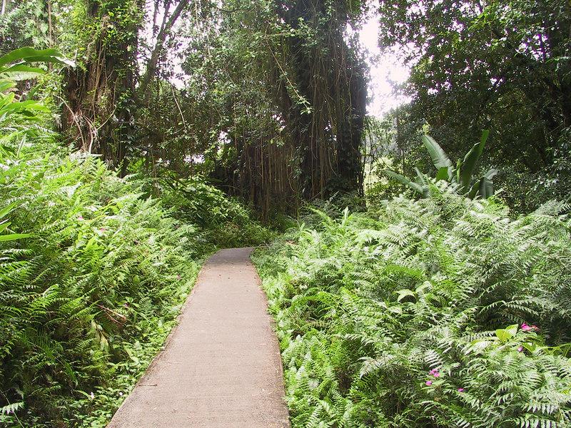 <b>Path to Akaka Falls</b>   (Jul 18, 2001, 02:15pm)