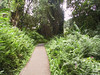 <b>Path to Akaka Falls</b>   (Jul 18, 2001, 02:15pm)