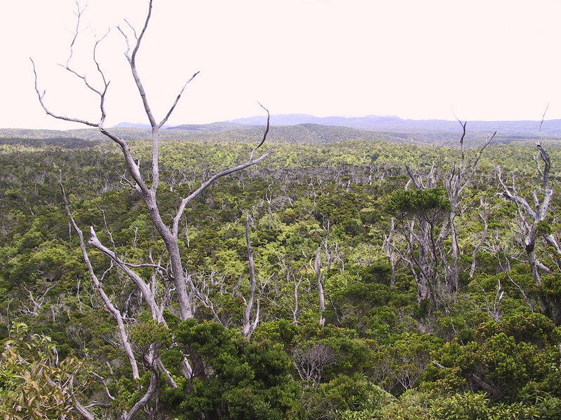 <b>Looking over the Alakai Swamp on a dry day</b>   (Jul 22, 2001, 02:14pm)