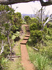 <b>Boardwalk leading into the Alakai swamp</b>   (Jul 22, 2001, 01:23pm)