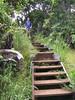 <b>Garrett on boardwalk on Pihea Trail</b>   (Jul 22, 2001, 01:25pm)