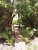 <b>Boardwalk on Pihea Trail</b>   (Jul 22, 2001, 12:58pm)