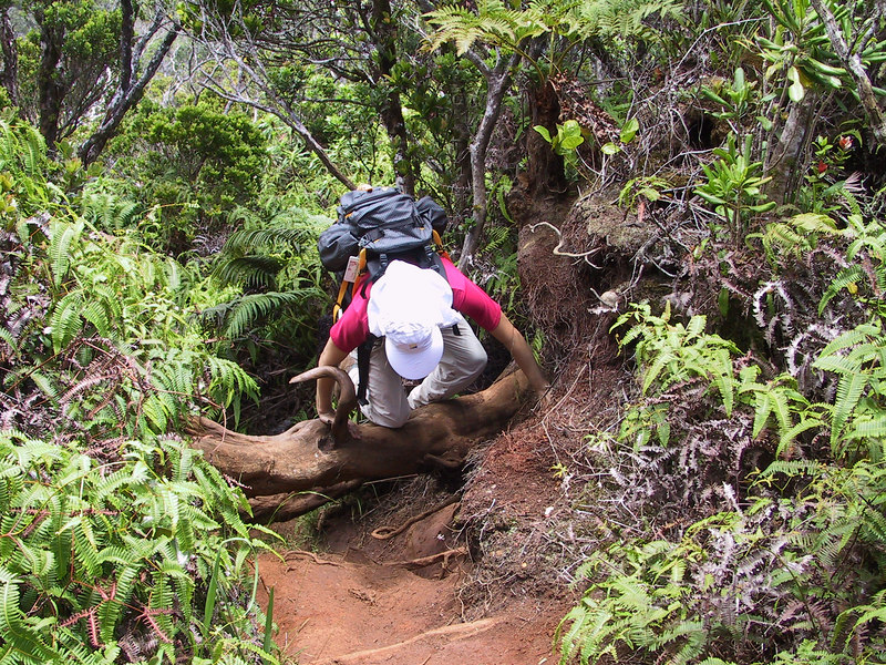 <b>Daphne makes the climb to the Pihea Vista</b>   (Jul 22, 2001, 01:07pm)