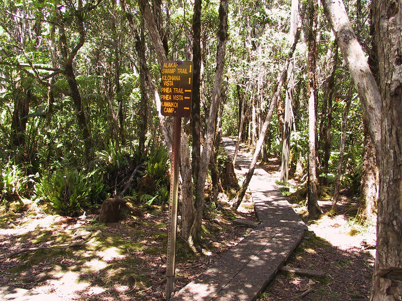 <b>Junction of Pihea Trail and Alakai Swamp Trail</b>   (Jul 22, 2001, 01:43pm)