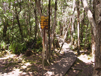 Junction of Pihea Trail and Alakai Swamp Trail   (Jul 22, 2001, 01:43pm)