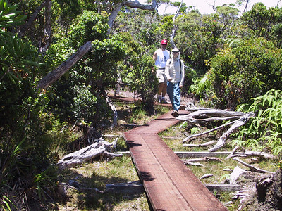 Damon and Daphne on Pihea Trail in Alakai Swamp   (Jul 22, 2001, 01:31pm)