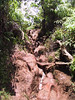 <b>The climb to the Pihea Vista</b>   (Jul 22, 2001, 01:03pm)