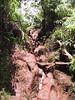 <b>The climb to the Pihea Vista</b>   (Jul 22, 2001, 01:03pm)