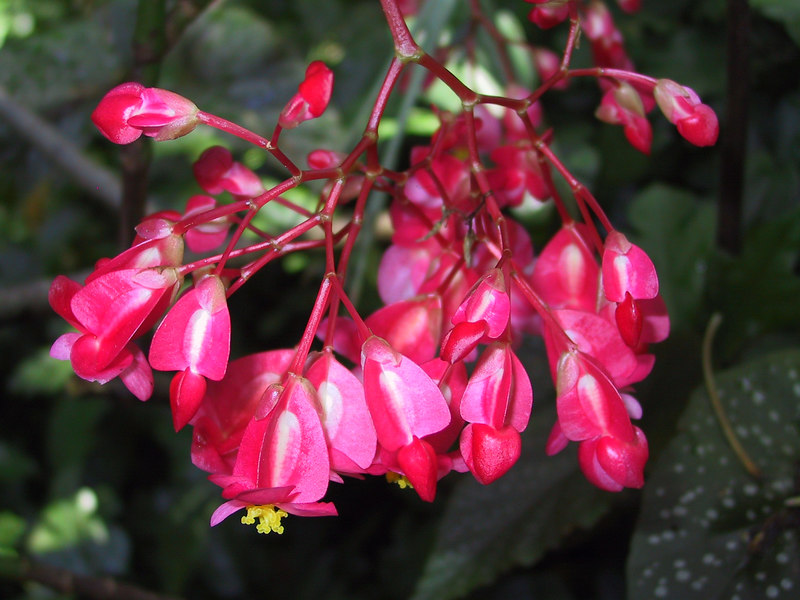 <b>Pretty flower seen at Allerton Garden</b>   (Jul 24, 2001, 10:33am)